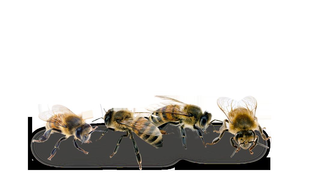 Včely - Auto RZ