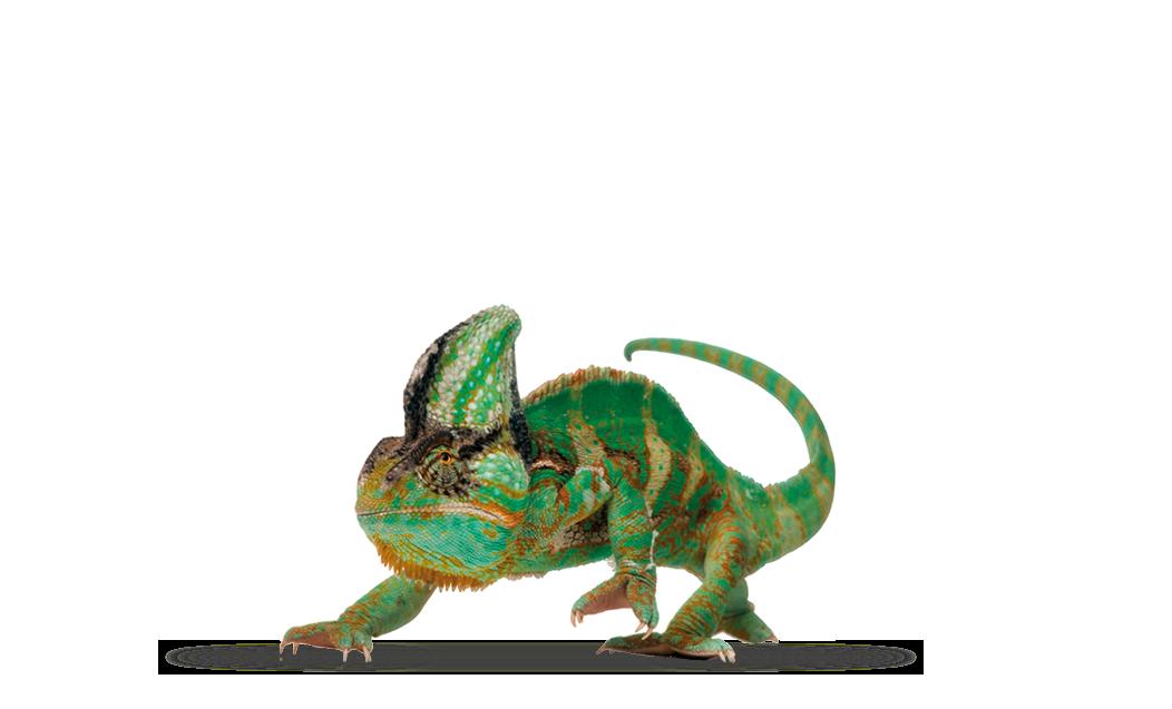 Chameleon - Auto RZ